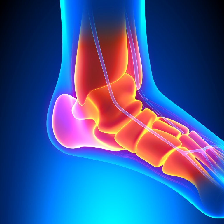 Ankle Bones Anatomy Pain Concept The Foot Ankle Center